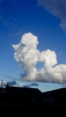 Poodle in the sky