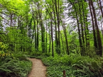 Portlands Hoyt Arboretum is unbelievably gorgeous