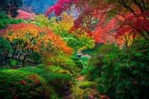 Portlands Japanese garden Photo taken by Kevin McNeal