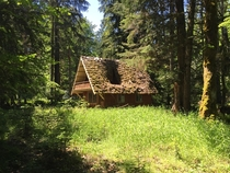 Posted a pic of a abandoned forestry cabin that had collapsed This is what it looked like a couple years ago