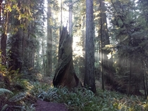 Prairie Creek Redwoods California State Park