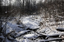 Quiet snowy stream in the Minnesota woods