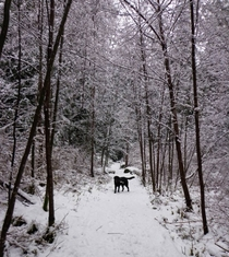 Quiet walk with my dog in Roberts Creek BC Canada