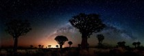 Quiver trees bathed in the cool glow of The Milky Way and the warm light of Keetmanshoop