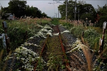 Railroad Tracks in Fukushima Japan