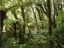 Rain forest in Mt Bruce National Wildlife Centre New Zealand