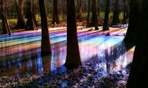 Rainbow-tinted swamp puddle in Congaree National Park  repost from rcampingandhiking
