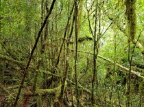 Rainforest Gordon River Tasmania