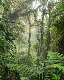 Rainforest in Monteverde Costa Rica  OC