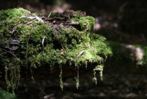 Rainforest moss