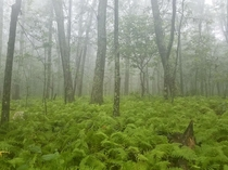 Rainy days are underrated on the AT near Humpback Rocks Blue Ridge Pkwy x