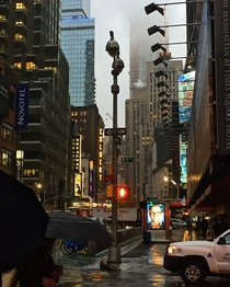Rainy Morning in NYC