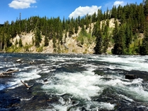 Rapids in Yellowstone National Park Wyoming