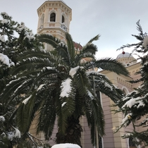 Rare snowfall on the palm trees in Greece