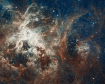 Raucous stellar breeding ground in  Doradus located in the heart of the Tarantula nebula