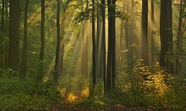Rays of light in a Polish forest near Zotw  photo by Krzysztof Winiarski