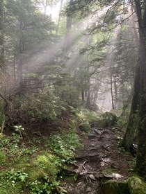 Rays of Light Thru The Canopy - Great Smokies NP near Clingmans Dome