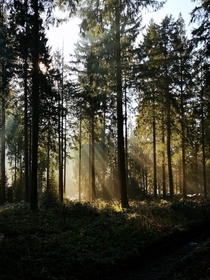 Rays of sunshine in the heart of the forest Germany