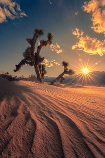 Reaching for the Light in Death Valley CA  jeremyveselyphotography