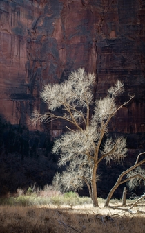 Reaching for the light Zion National Parkpjphotoscapes