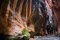 Recently got to explore the Narrows at Zion National Park and came away with this photo