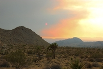 Red sun through a dust storm in Joshua Tree CA