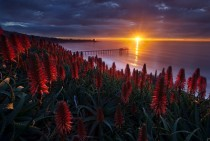 Red Sunset and Flowers location unknown