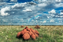 Red termite mounds near Derby in the Kimberley region of Western Australia