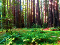 Redwood forest in northern California This region has some of the oldest trees on Earth