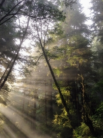 Redwood National Forest  IG endearingjourney
