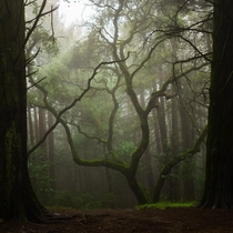 Redwood Regional Park Oakland California