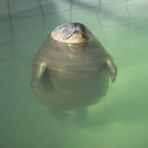 Relaxed seal in the pool