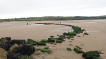 Remains of a medieval fish weir just above the low water mark at Lligwy Beach Anglesey Wales