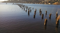 Remains of What Im Guessing is an Old Pier on Lake Washington