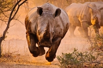 Rhino learning to fly at sunset in South Africa photographed by Justus Vermaak