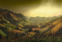 Rice and Corn Fields in Chiang Mai Thailand  by Charungroj Bunphabuth