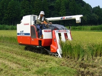 Rice combine harvester in Katori-city Japan