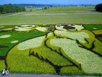 Rice field art - each colour is a different strain of rice although only the green one used as a background is edible - Takasu Hokkaido Japan