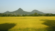 Rice fields in So Joo do Polsine RS Brazil