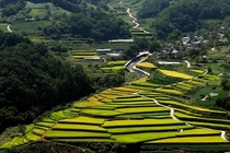 Rice paddies in Macheon Hamyang South Gyeongsang Province South Korea