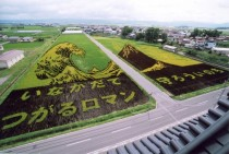Rice paddy art Inakadate Japan