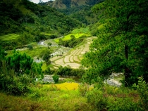 Rice Terraces and Pine Trees in Municipality of Lacub Province of Abra Philippines