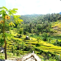 Rice terraces at Bali Indonesia