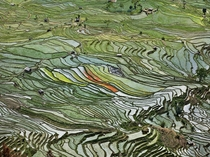 Rice Terraces in Western Yunnan Province China