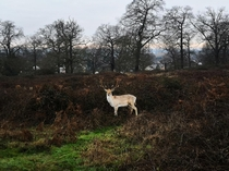 Richmond Park this morning -