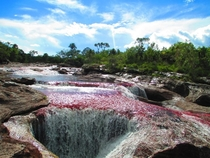 River of Seven Colors Cao Cristales El Meta Colombia