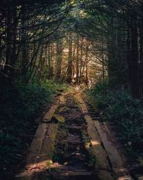Road to the old lighthouse on Vancouver island