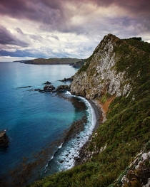 Roaring bay The Catlins - New Zealand