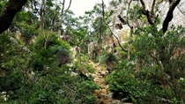 Rock Scramble up a gully Mt Maroon Queensland Australia OC
