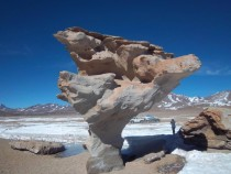 Rock tree formed by the wind - Uyuni Bolivia